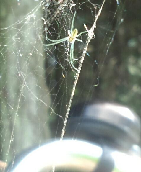 自転車のハンドルに巣を張る蜘蛛