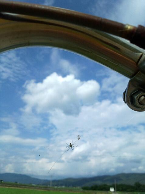 自転車のハンドルに巣を張る蜘蛛と空