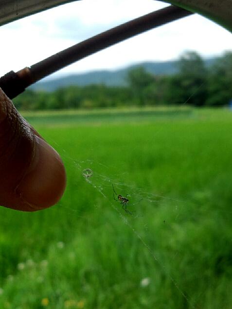 自転車のハンドルに巣を張る蜘蛛と親指